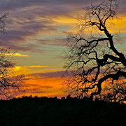 Sunset_through_blue_oaks__skp_park_sierra__coarsegold__ca__card