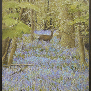 English_bluebell_wood_card