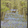 English_bluebell_wood_thumb