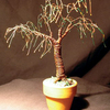 Umbrella_bonsai_thumb