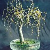 Willow_in_round_glass_thumb