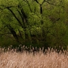 Grass___trees_8
