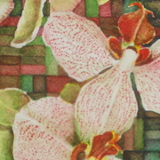 2_orchid_card