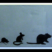 Evolution_of_the_rat_card