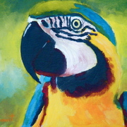 _257_parrot_yellow_and_blue_acrylic_on_canvas_board_8x10___card