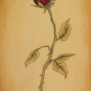 Rose_full_crop_card