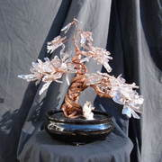Bonsai_027_card
