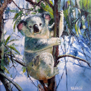 Koala_50x50_cm_oil_on_canvs__3__card