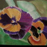 Pansies_copy_card