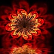 Pam_amos_fire_flower02_card