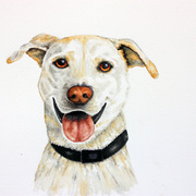 White_dog_1_card
