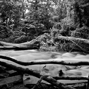 Black_and_white_river_020_card