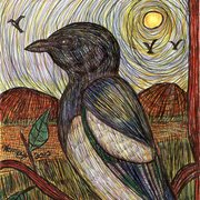 Black_billed_magpie_with_friends_nearby_card