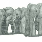 Elephants_card