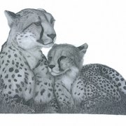 Cheetah_and_cub_card