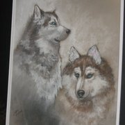 Sled_dogs_card