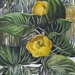 Yellow_waterlilies_s_square