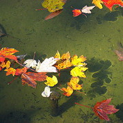 Leaves_card