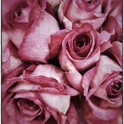 Driedrose_card
