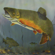 Trout_in_progress_card