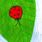 Lady_bug2_card