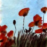 Blooming_poppies_card