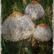 Mushrooms_card
