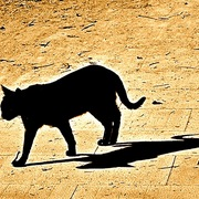 Cat_shadow-barcelona_-montjuic__art_005_copy_card