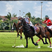 Poloaction_card