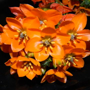 Orangestarflower1_card