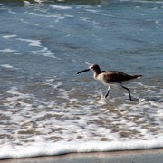 Wading_bird_closeup