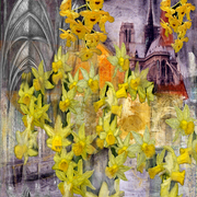 Yellow_flowers_catedral_card