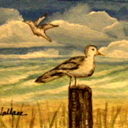 Sea_gull_bay_card