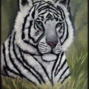 Whitetiger11framed_card