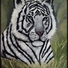 Whitetiger11framed_thumb