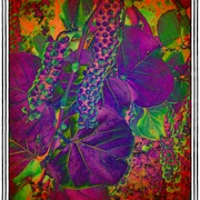 Groovygrapes_snapseed_card
