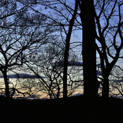 Sunset_trees-1_card