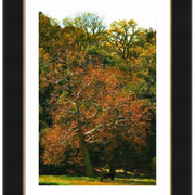 Carmel_valley_pasture-f_card
