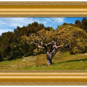 Carmel_valley_spring__1-f_card