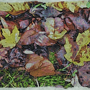 Leaves_on_ground_card