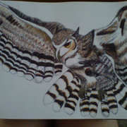 Great_horned_owl_card