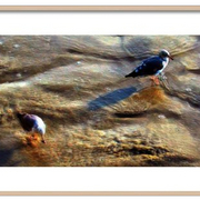Seagull_s_morning_sand-f_card
