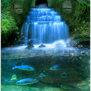Wishing_well__coin__a3_more_contrast_card