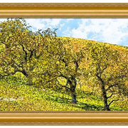 California_hillside-f_card