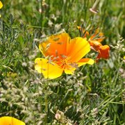 Orange_flowers_card