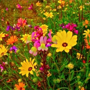 1114spring_flowers_along_california_hwy