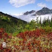 Clouds__hurricane_hill_trail__olympic_national_park__wa__card