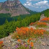 Giant_paintbrush_and_cliff_penstemon_along_east_rim_road__crater_lake_national_park__or_thumb