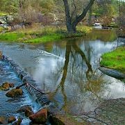 Coarsegold_creek_in_spring__skp_park_sierra__coarsegold__ca__card
