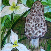 Trilliums_and_the_toad_stool_card